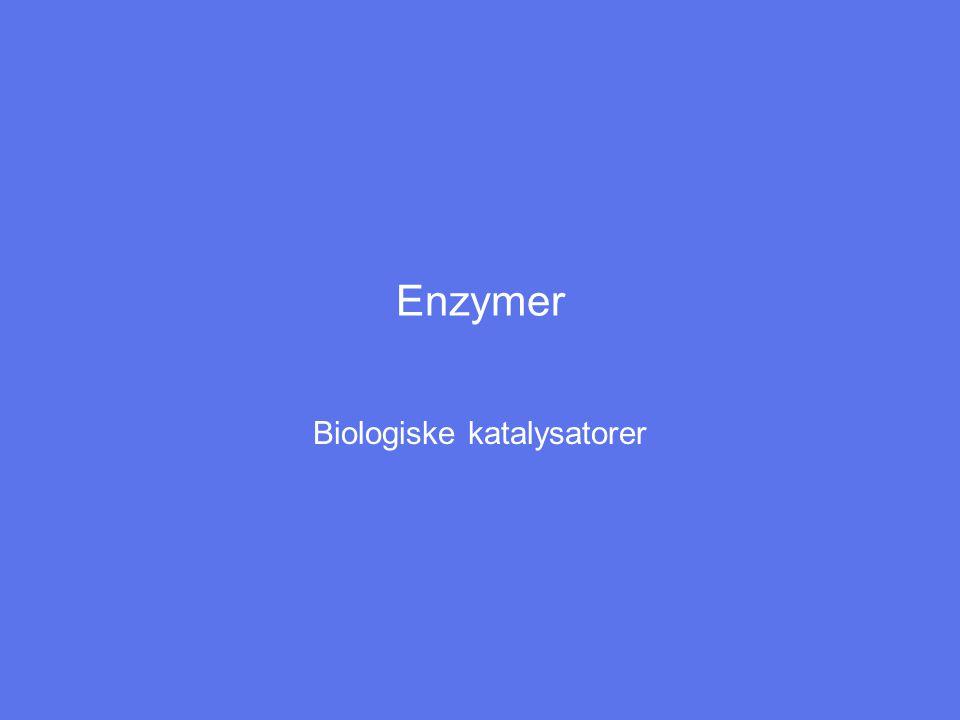 Enzymer Biologiske katalysatorer