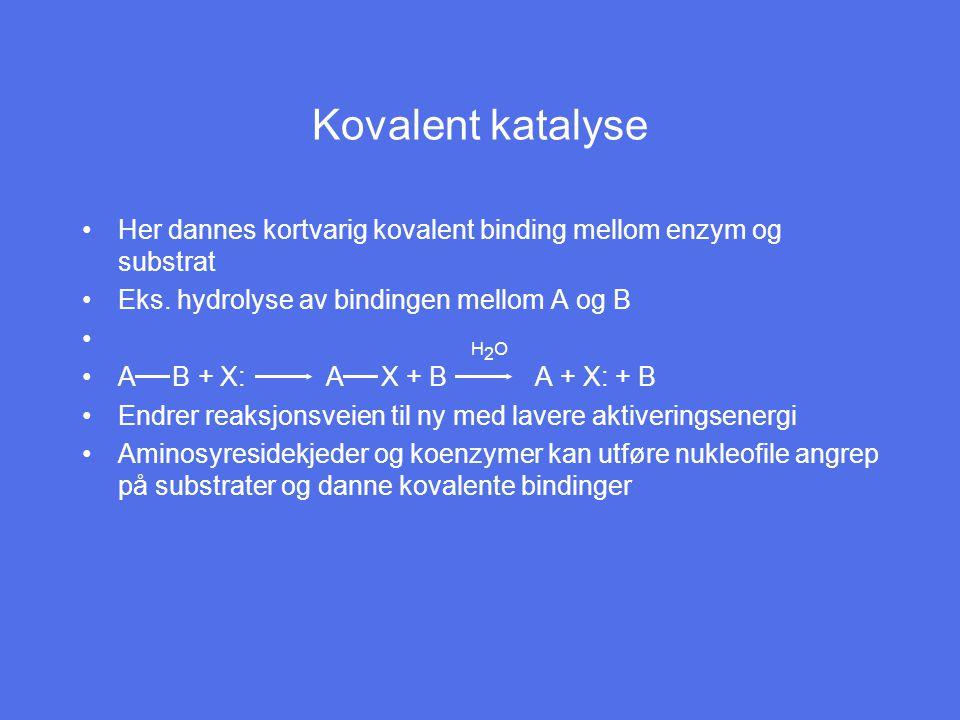 Kovalent katalyse Her dannes kortvarig kovalent binding mellom enzym og substrat Eks.