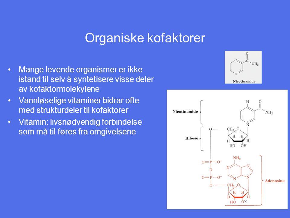 Organiske kofaktorer Mange levende organismer er ikke istand til selv å syntetisere visse deler av kofaktormolekylene Vannløselige vitaminer bidrar ofte med strukturdeler til kofaktorer Vitamin: livsnødvendig forbindelse som må til føres fra omgivelsene