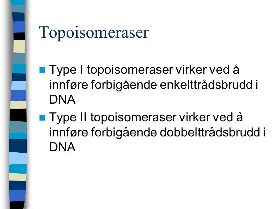 Topoisomeraser Type I topoisomeraser virker ved å innføre forbigående enkelttrådsbrudd i DNA Type II topoisomeraser virker ved å innføre forbigående d