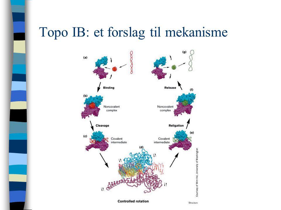 Topo IB: et forslag til mekanisme