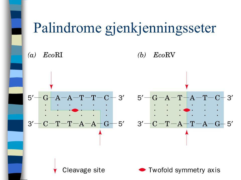 Palindrome gjenkjenningsseter