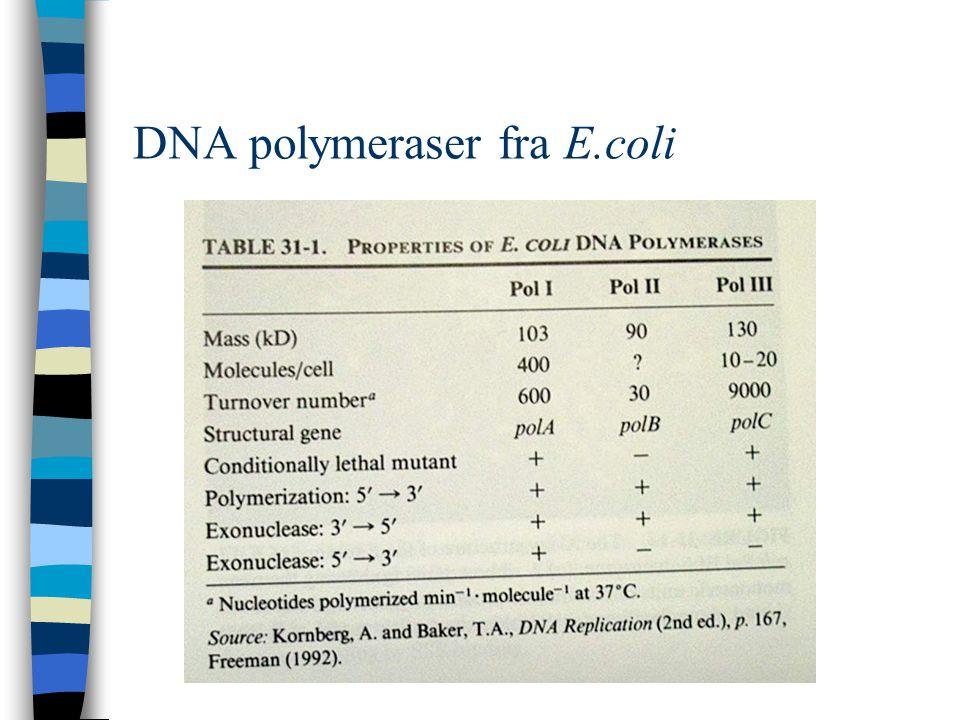 DNA polymeraser fra E.coli