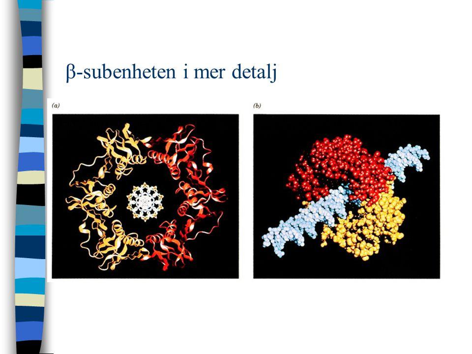 β-subenheten i mer detalj