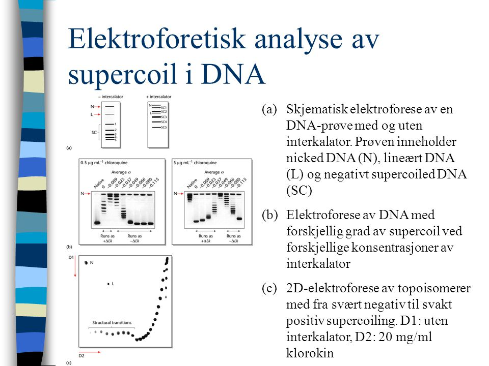 Figure 7-15Autoradiograph of a sequencing gel. Page 179