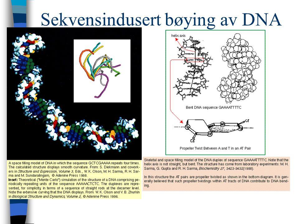 Sequencing with labelled terminators GATC ddATP ddCTP ddGTP ddTTP