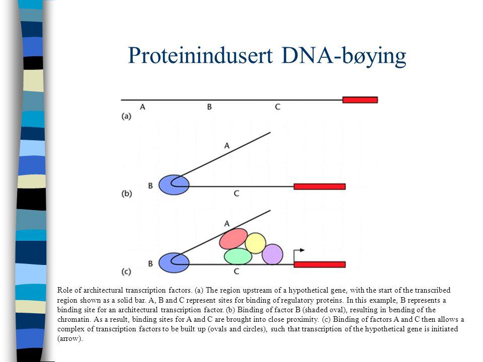Elektroforetisk analyse av bøyd DNA
