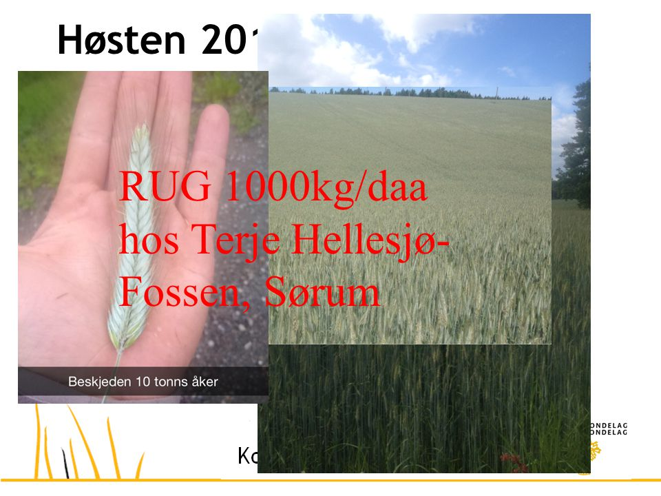 Høsten 2014 – drømmeåret? RUG 1000kg/daa hos Terje Hellesjø- Fossen, Sørum