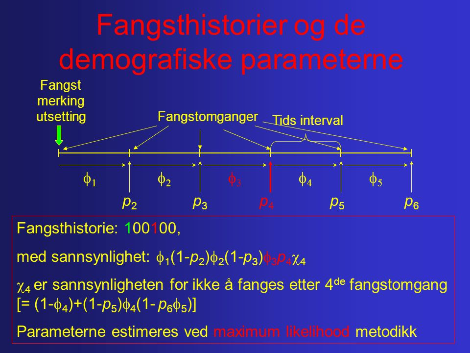 Fangsthistorier og de demografiske parameterne Fangst merking utsetting 11 55 44 33 22 Tids interval p2p2 p5p5 p4p4 p3p3 p6p6 Fangsthistorie: 100100, med sannsynlighet:  1 (1-p 2 )  2 (1-p 3 )  3 p 4  4  4 er sannsynligheten for ikke å fanges etter 4 de fangstomgang [= (1-  4 )+(1-p 5 )  4 (1- p 6  5 )] Parameterne estimeres ved maximum likelihood metodikk Fangstomganger
