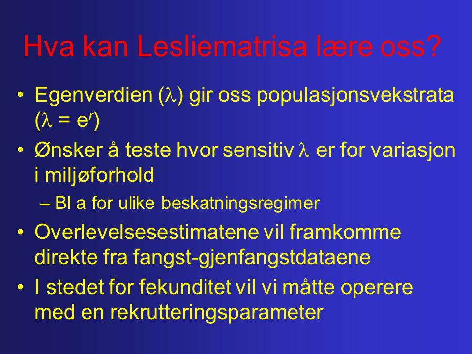 Hva kan Lesliematrisa lære oss? Egenverdien ( ) gir oss populasjonsvekstrata ( = e r ) Ønsker å teste hvor sensitiv er for variasjon i miljøforhold –B
