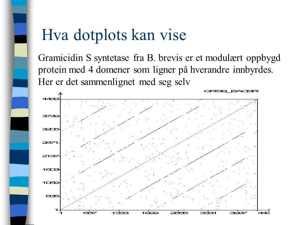 Hva dotplots kan vise Gramicidin S syntetase fra B.