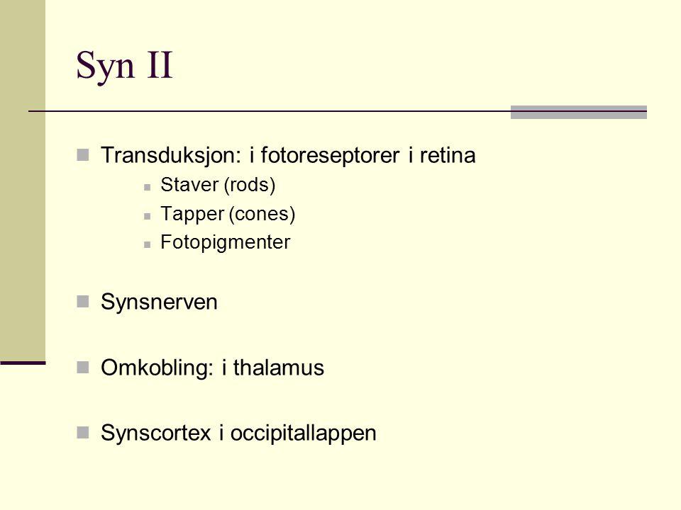 Syn II Transduksjon: i fotoreseptorer i retina Staver (rods) Tapper (cones) Fotopigmenter Synsnerven Omkobling: i thalamus Synscortex i occipitallappe
