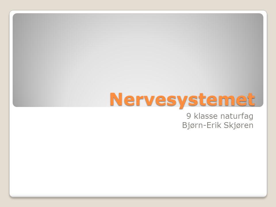 Nervesystemet 9 klasse naturfag Bjørn-Erik Skjøren