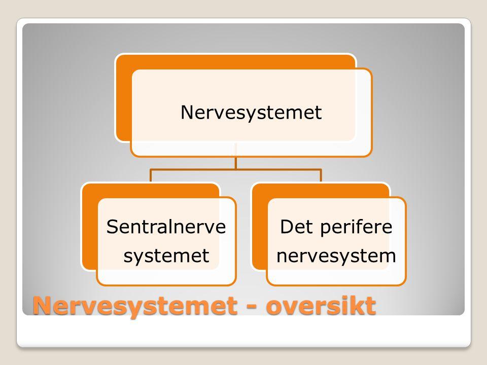 Nervesystemet - oversikt Nervesystemet Sentralnerve systemet Det perifere nervesystem