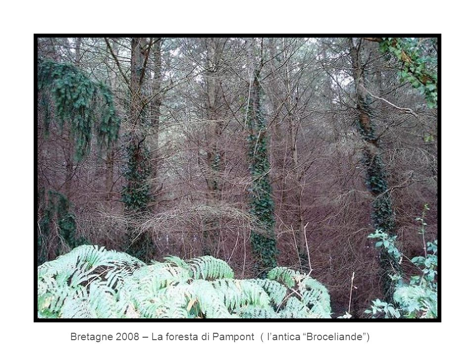 """Bretagne 2008 – La foresta di Pampont ( l'antica """"Broceliande"""")"""