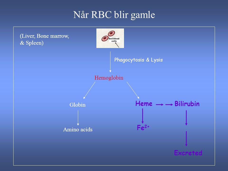 Når RBC blir gamle (Liver, Bone marrow, & Spleen) Hemoglobin Globin Amino acids Heme Bilirubin Fe 2+ Excreted Phagocytosis & Lysis