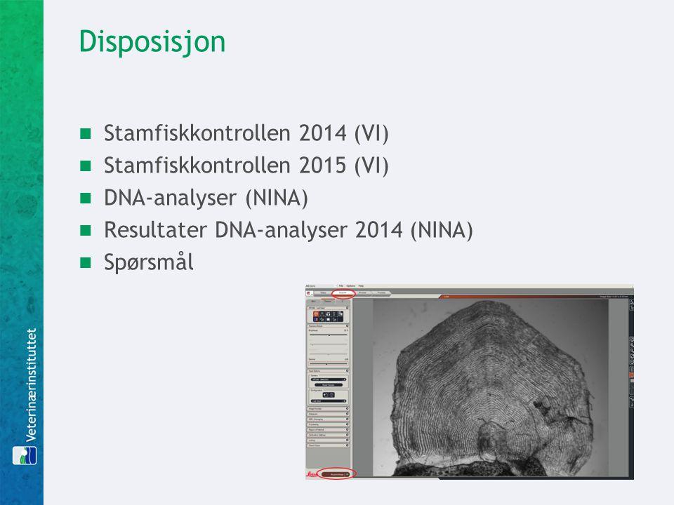 Disposisjon Stamfiskkontrollen 2014 (VI) Stamfiskkontrollen 2015 (VI) DNA-analyser (NINA) Resultater DNA-analyser 2014 (NINA) Spørsmål