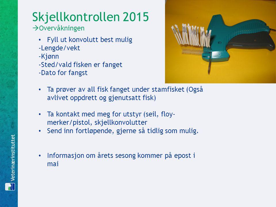 Skjellkontrollen 2015  Overvåkningen Fyll ut konvolutt best mulig -Lengde/vekt -Kjønn -Sted/vald fisken er fanget -Dato for fangst Ta prøver av all f