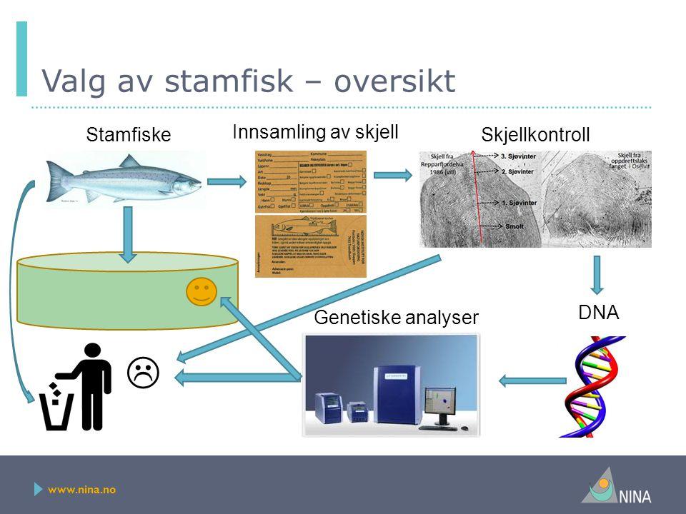 www.nina.no Valg av stamfisk – oversikt Innsamling av skjell Skjellkontroll DNA Genetiske analyser  Stamfiske