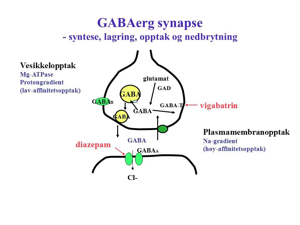 GABAerg synapse - syntese, lagring, opptak og nedbrytning GABA GABA B Plasmamembranopptak Na-gradient (høy-affinitetsopptak) GABA-T glutamat Cl- GABA