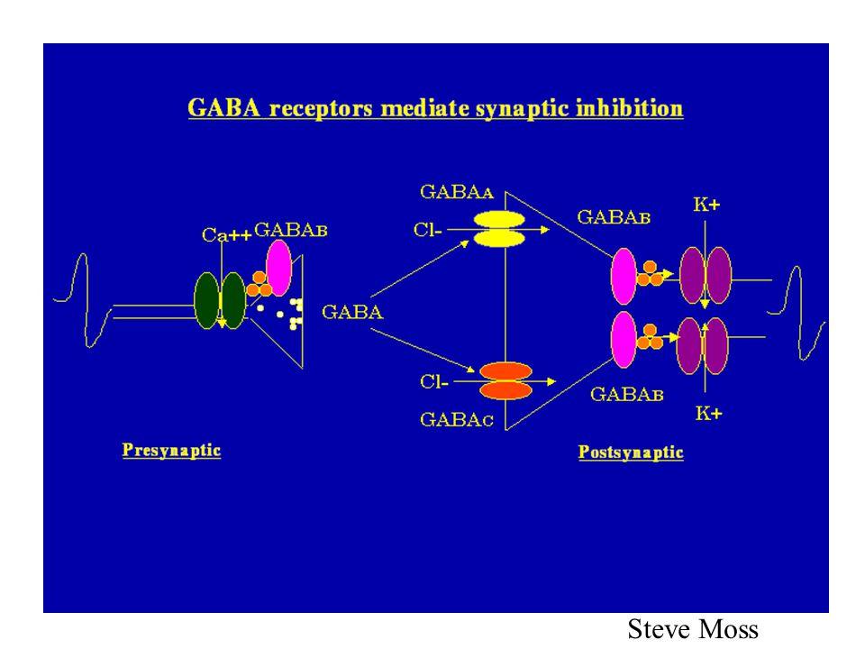 GABA A -reseptoren GABA Cl - Benzodiazepiner Barbiturater Steroider Penicilliner Etanol