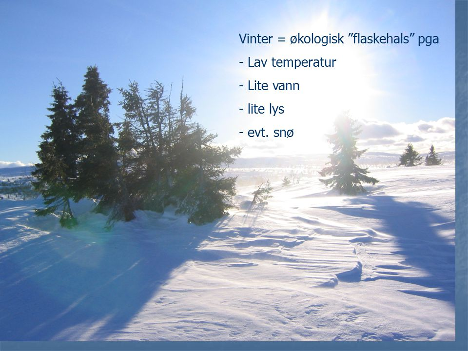 Vinter = økologisk flaskehals pga - Lav temperatur - Lite vann - lite lys - evt. snø