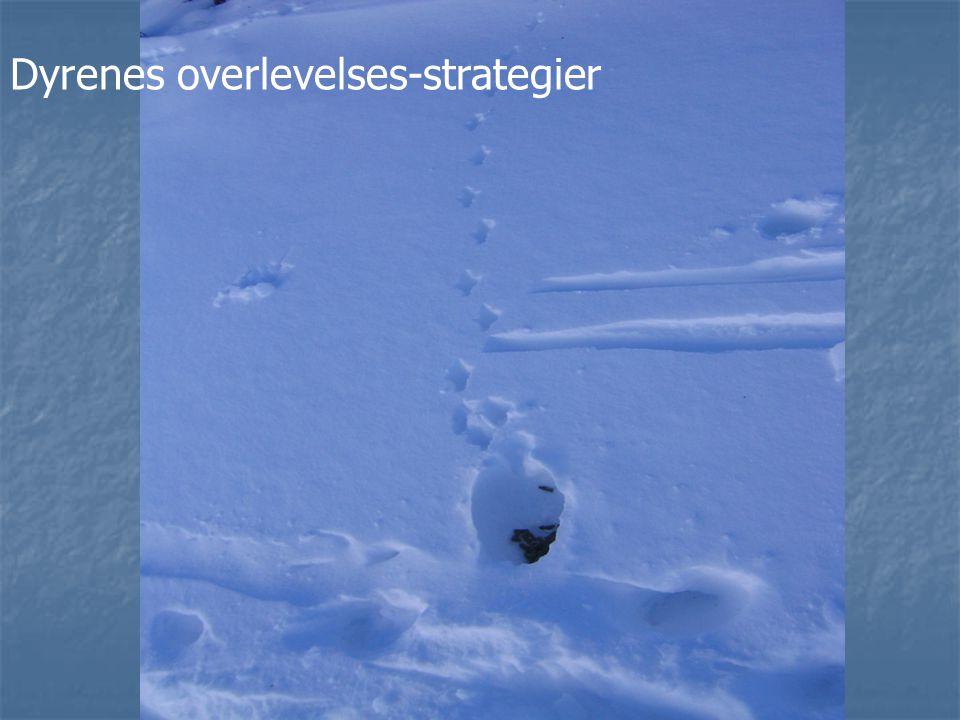 Dyrenes overlevelses-strategier