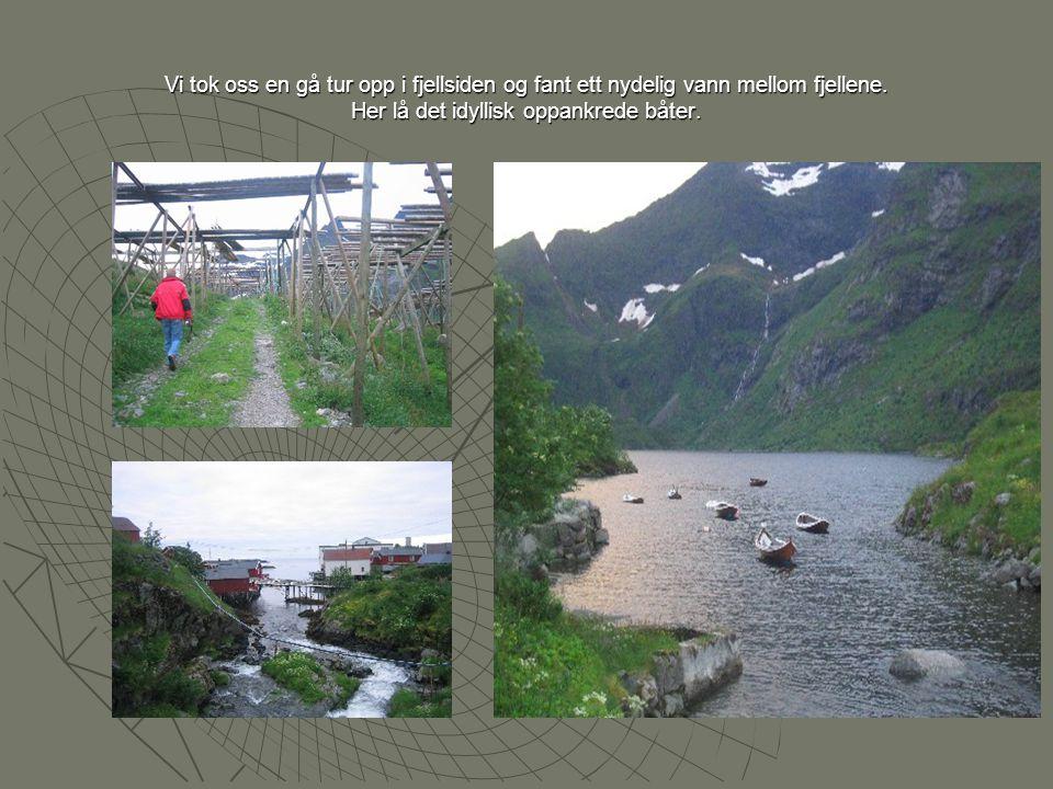 På Reine lå det to båter fra Sverige.Den ene var Lindisfarne som Skulle på 2-10 års jordomseiling.