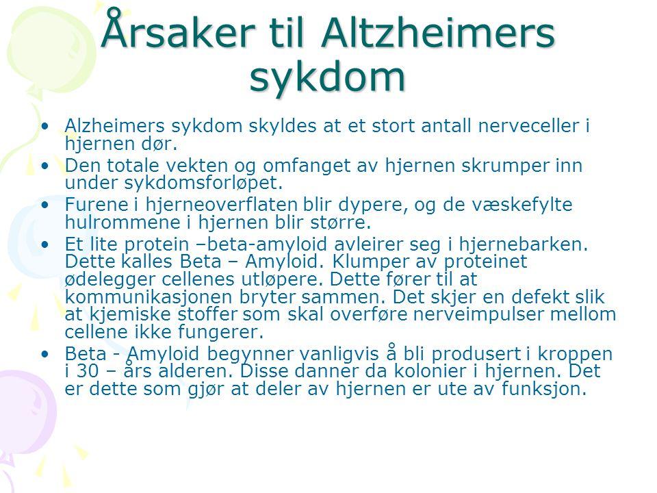 Årsaker til Altzheimers sykdom Alzheimers sykdom skyldes at et stort antall nerveceller i hjernen dør. Den totale vekten og omfanget av hjernen skrump