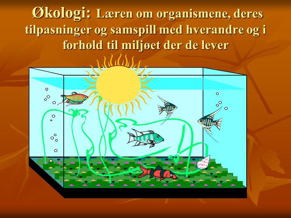 Økologi: Læren om organismene, deres tilpasninger og samspill med hverandre og i forhold til miljøet der de lever Økologi: Læren om organismene, deres