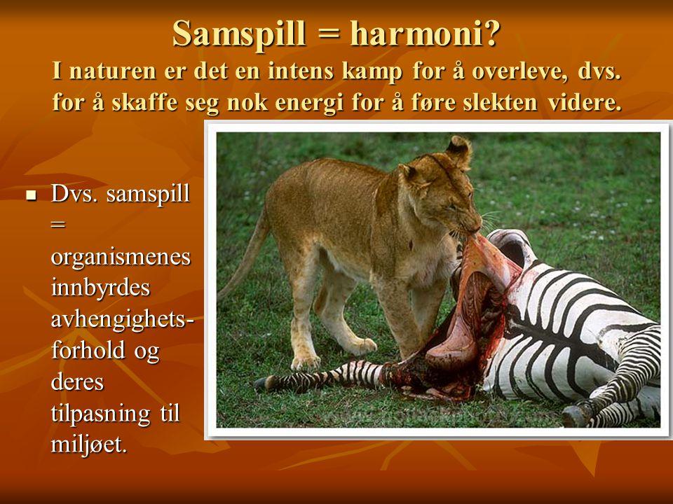 Samspill = harmoni? I naturen er det en intens kamp for å overleve, dvs. for å skaffe seg nok energi for å føre slekten videre. Dvs. samspill = organi