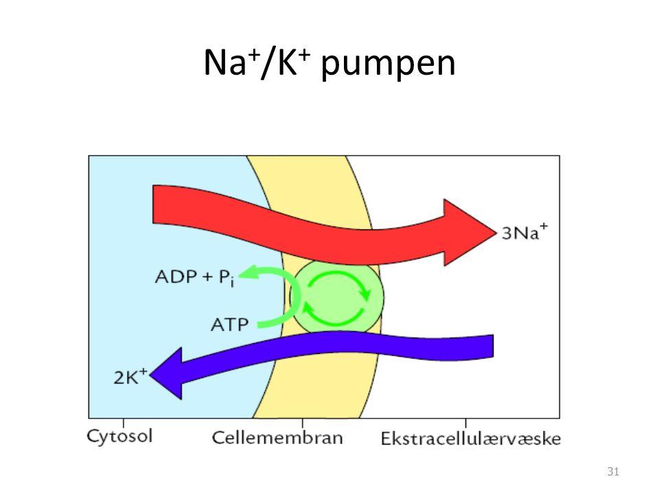 Na + /K + pumpen 31