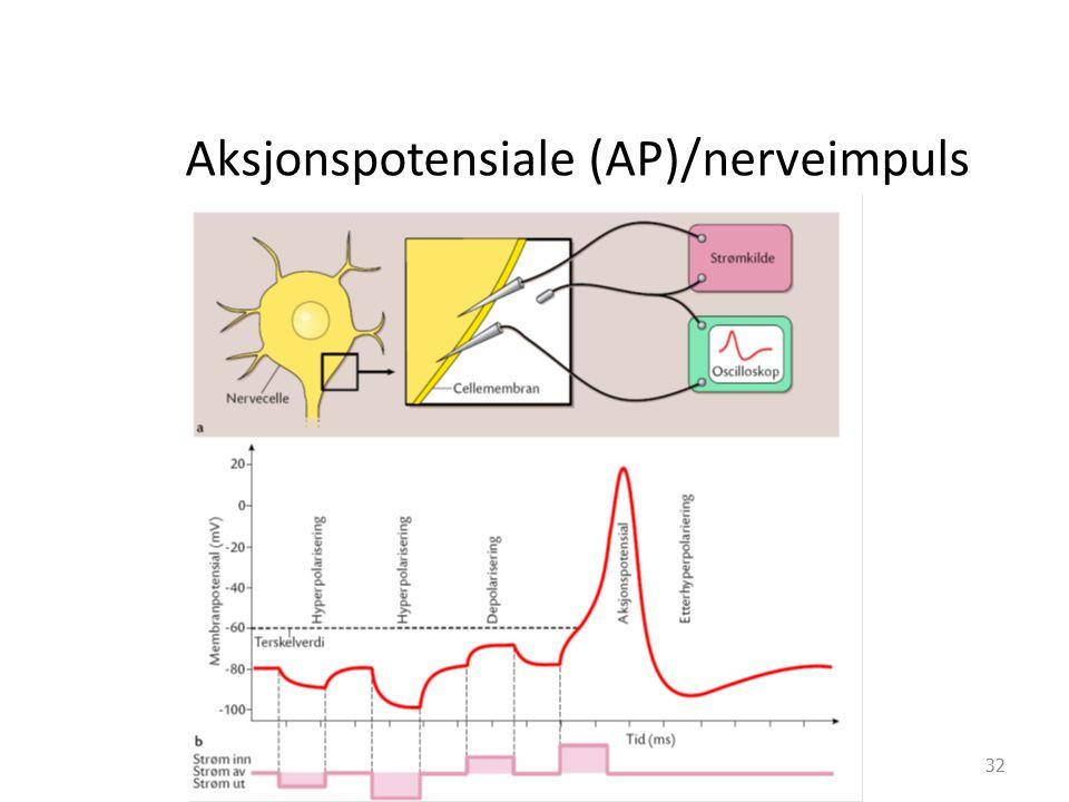 Aksjonspotensiale (AP)/nerveimpuls 32