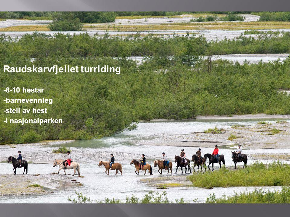 Raudskarvfjellet turriding -8-10 hestar -barnevennleg -stell av hest -i nasjonalparken