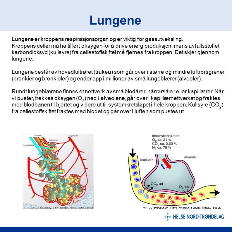 Lungene er kroppens respirasjonsorgan og er viktig for gassutveksling. Kroppens celler må ha tilført oksygen for å drive energiproduksjon, mens avfall