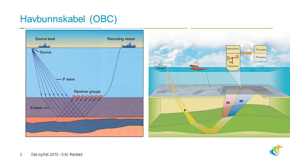 Havbunnskabel (OBC) Olje og fisk 2015 - O.M. Rørstad 8