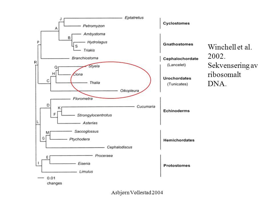 Asbjørn Vøllestad 2004 Winchell et al. 2002. Sekvensering av ribosomalt DNA.