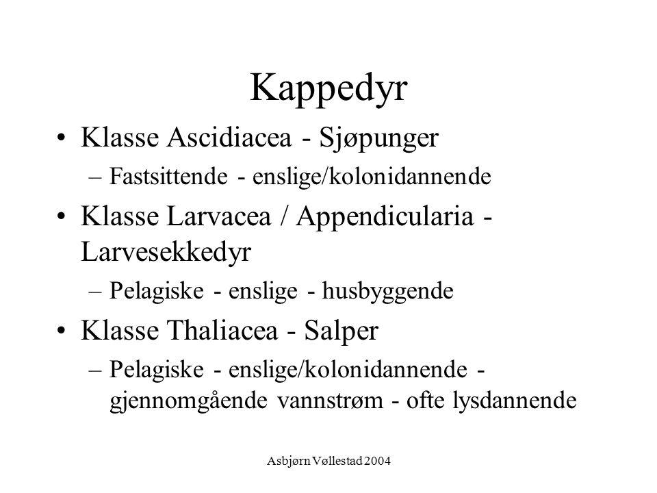 Asbjørn Vøllestad 2004 Kappedyr Klasse Ascidiacea - Sjøpunger –Fastsittende - enslige/kolonidannende Klasse Larvacea / Appendicularia - Larvesekkedyr