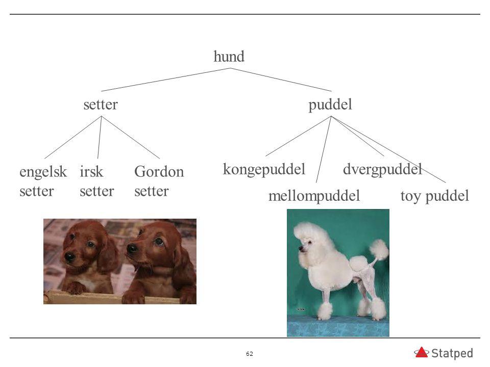 62 hund setterpuddel engelsk setter irsk setter Gordon setter kongepuddel mellompuddel dvergpuddel toy puddel