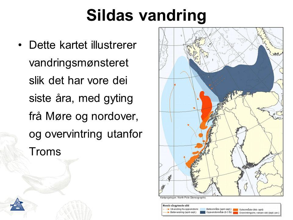 Sildas vandring Dette kartet illustrerer vandringsmønsteret slik det har vore dei siste åra, med gyting frå Møre og nordover, og overvintring utanfor