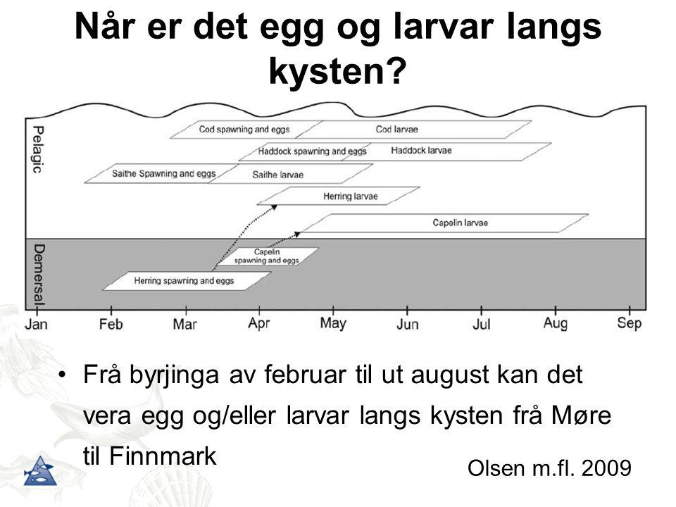 Når er det egg og larvar langs kysten? Frå byrjinga av februar til ut august kan det vera egg og/eller larvar langs kysten frå Møre til Finnmark Olsen