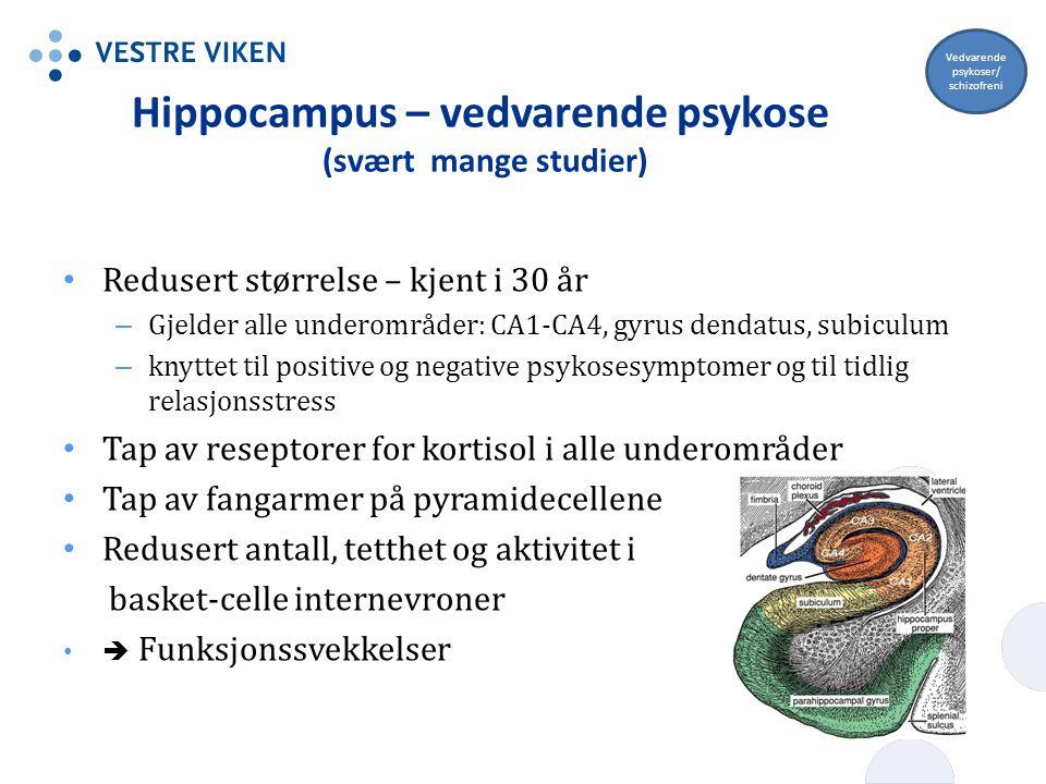 Hippocampus – vedvarende psykose (svært mange studier) Redusert størrelse – kjent i 30 år – Gjelder alle underområder: CA1-CA4, gyrus dendatus, subicu