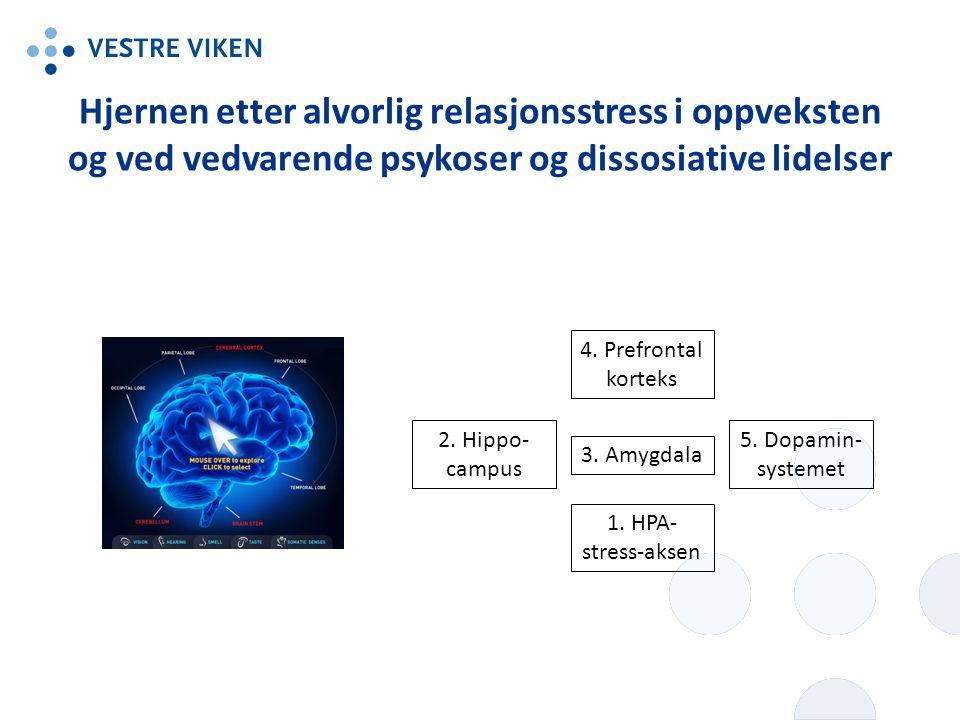 1. HPA- stress-aksen 5. Dopamin- systemet 3. Amygdala 2. Hippo- campus 4. Prefrontal korteks Hjernen etter alvorlig relasjonsstress i oppveksten og ve