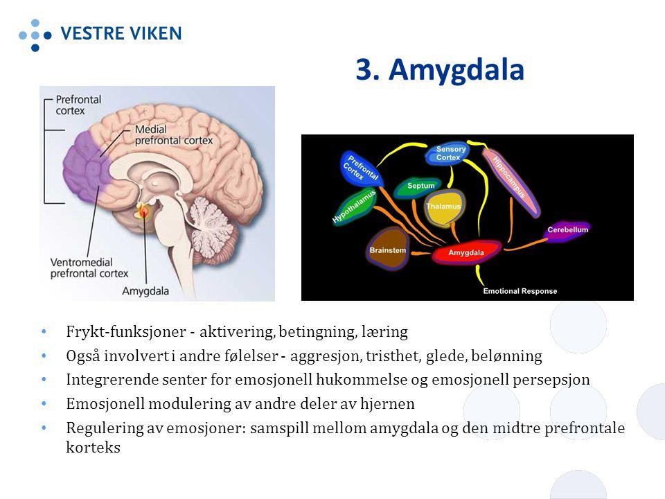 3. Amygdala Frykt-funksjoner - aktivering, betingning, læring Også involvert i andre følelser - aggresjon, tristhet, glede, belønning Integrerende sen