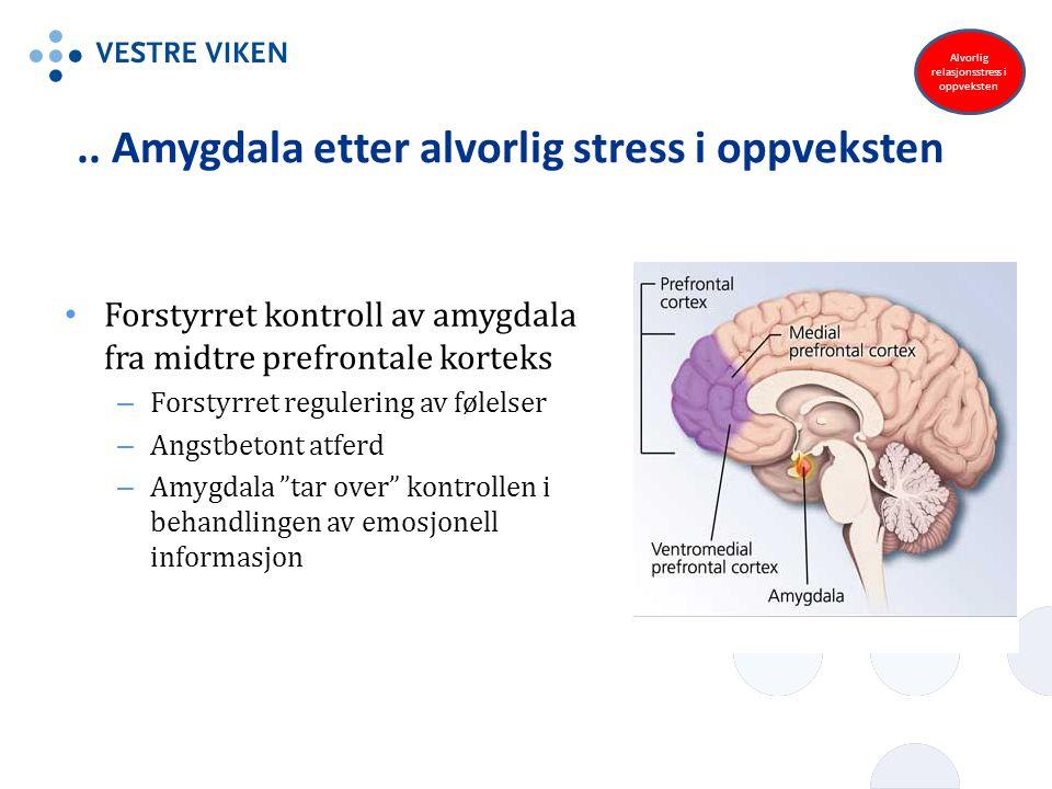 .. Amygdala etter alvorlig stress i oppveksten Forstyrret kontroll av amygdala fra midtre prefrontale korteks – Forstyrret regulering av følelser – An