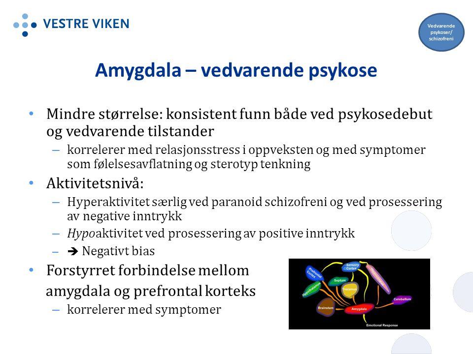 Amygdala – vedvarende psykose Mindre størrelse: konsistent funn både ved psykosedebut og vedvarende tilstander – korrelerer med relasjonsstress i oppv