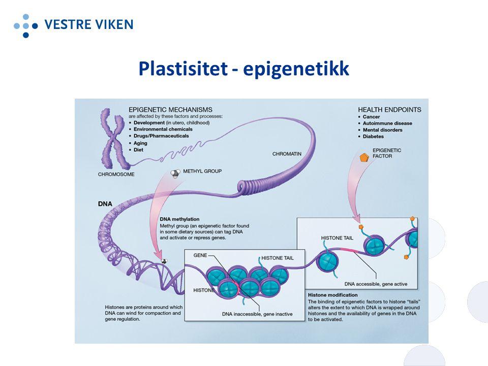 Plastisitet - epigenetikk