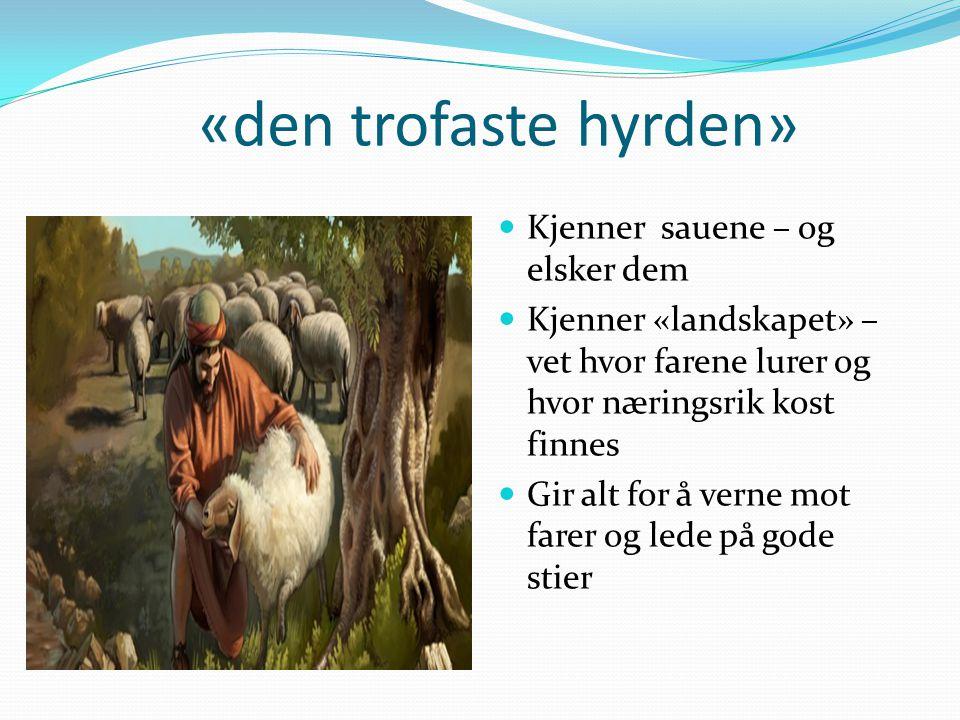 «den trofaste hyrden» Kjenner sauene – og elsker dem Kjenner «landskapet» – vet hvor farene lurer og hvor næringsrik kost finnes Gir alt for å verne m