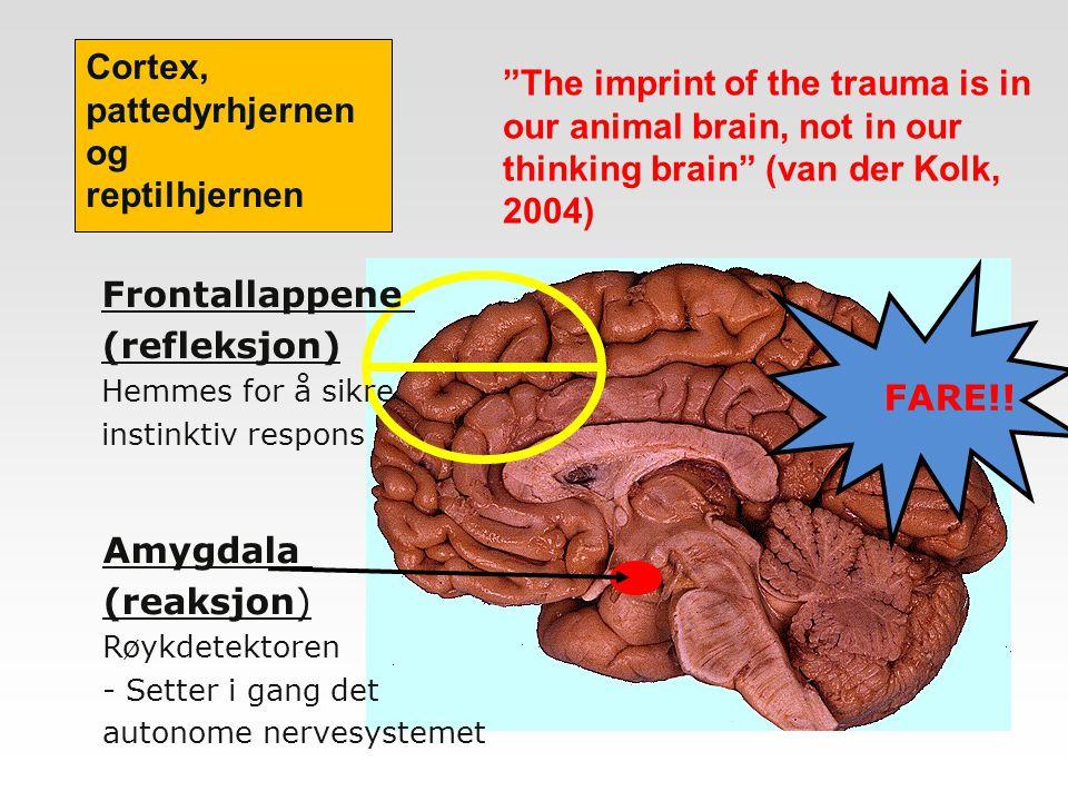 FARE!! Amygdala (reaksjon) Røykdetektoren - Setter i gang det autonome nervesystemet Frontallappene (refleksjon) Hemmes for å sikre instinktiv respons