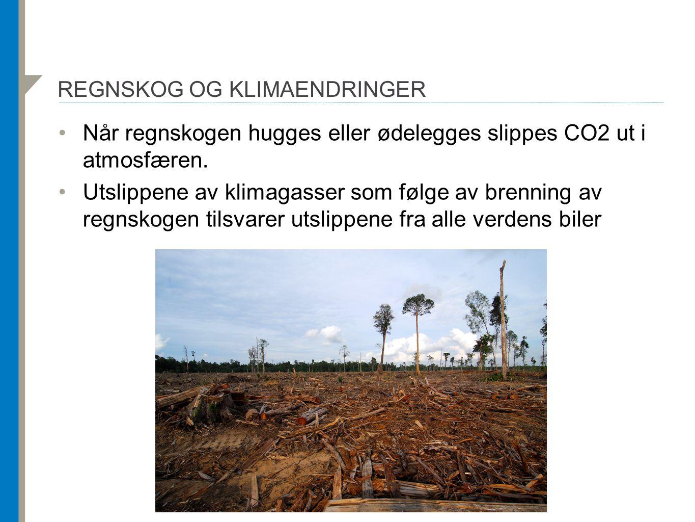 REGNSKOG OG KLIMAENDRINGER Når regnskogen hugges eller ødelegges slippes CO2 ut i atmosfæren. Utslippene av klimagasser som følge av brenning av regns